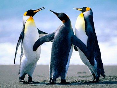Dois pinguins sao encontrados na Ilha de Itaparica, na Bahia